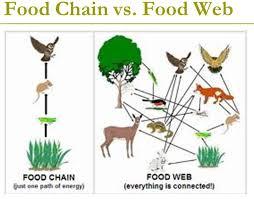 food web pyramid 1 h food chains web and pyramid andres robotics and science