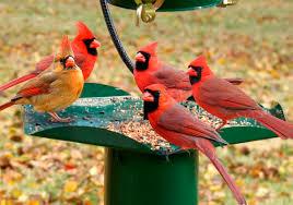 Image result for images bird feeder birds