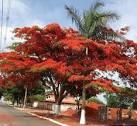 imagem de Santa Rosa da Serra Minas Gerais n-8