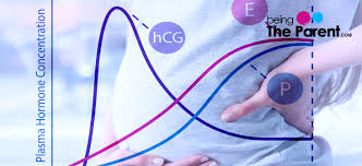 Beta Results Pregnancy Chart Hcg Levels Chart During Pregnancy Week By Week Being The