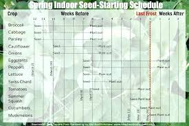 Seed Starting Chart Zone 6 Which Plants To Start Indoors Cartin Co