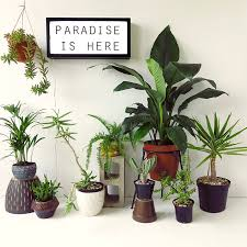 small plant for office desk. indoor plants for stress relief skinny laminx paradise is here u201c small plant office desk e