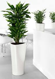 office planter. indoor office plants pots planter t