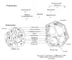 A Venn Diagram Of Prokaryotic And Eukaryotic Cells Geol 1122