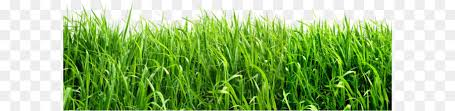 grass png. Unique Grass Clip Art  Grass Png Image Green PNG Picture To Grass Png P