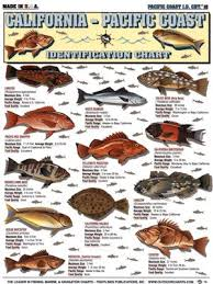Rockfish Identification Chart Tightlines Chart 15 California Pacific Ocean Id Chart