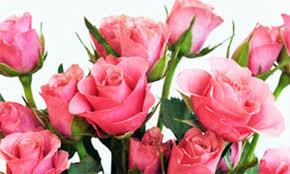 Картинки по запросу ziedi