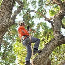 selected photos from terryu0027s tree service inc terrys tree service t12