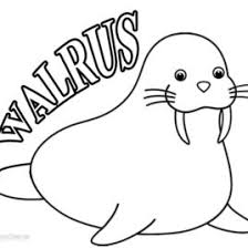 Small Picture Walrus Coloring Page Awesome Color In This Walrus Coloring Page