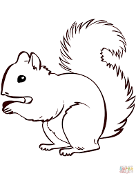 Squirrel Coloring Page Printable Coloring Pages