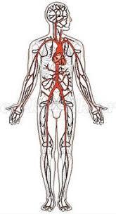 Конспект урока Познание мира в классе Сердце главный орган  Тема урока Сердце главный орган кровеносной системы