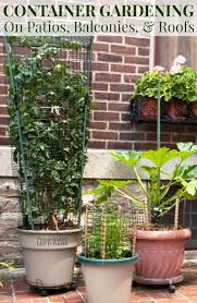 container gardening in small spaces