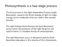 photosynthesis is a two stage process the first process is the light dependent process light