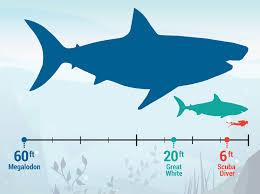 megalodon shark. Wonderful Shark Megalodon Shark Facts Throughout Megalodon Shark