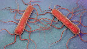 Resultado de imagen de Síntomas de la Listeria