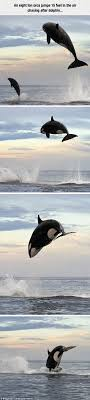 ideas about Oceans Of The World on Pinterest   Continents     Pinterest