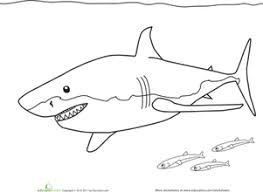 Small Picture Color the Great White Shark Worksheet Educationcom