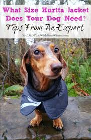 Dachshund Size Chart Never Fear Sizing For Hurtta Dog Jackets Is Easy