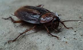 roach on cement