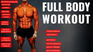 Bodybuilding Exercises Chart Free Download Pdf The Best Science Based Full Body Workout For Growth 11 Studies