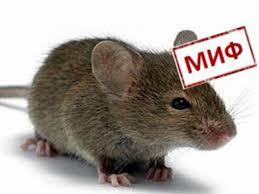 Картинки по запросу мышь в сип панели