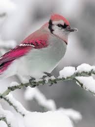 winter animal nature backgrounds. Beautiful Nature Preview Wallpaper Bird Winter Snow Branch Nature With Winter Animal Nature Backgrounds W