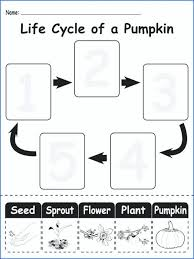 Plants Worksheets For Kids Worksheet Free Printable Plant Parts Cycle