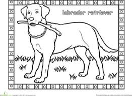 Small Picture Labrador Worksheet Educationcom