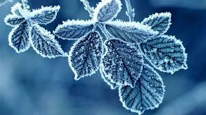 Bildresultat för frost