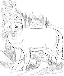 Small Picture Coyote Color Coloring Coloring Pages