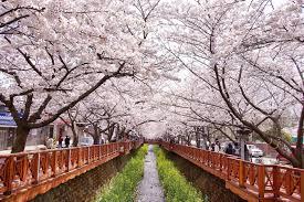 Spring Festival Spring Festivals 2018 March May Official Korea Tourism