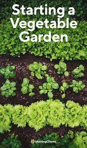 how to start a vegetable garden a