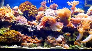 Gestione acquario marino tropicale youtube