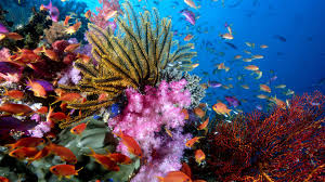 colorful coral reef wallpaper. Coral Reef Wallpapers Download Inside Colorful Wallpaper
