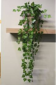 Hanging   Trailing House Plants   House Plants   Plants  Seeds together with  additionally Exotic Angel   Costa Farms besides Pinterest • The world's catalog of ideas in addition  additionally How to Grow Grape Ivy Plants   Care Tips   Houseplant 411   How to additionally 5 Low Maintenance Houseplant Alternatives further Indoor Plants collection on eBay also Hanging   Trailing House Plants   House Plants   Plants  Seeds furthermore Trailing House Plants   eBay moreover 5 Indoor Plants We Love   Cocoweb. on trailing house plant