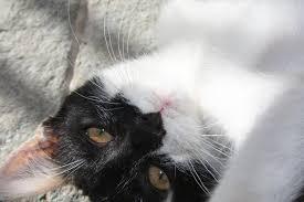 my new cat pic 2 by iropagis