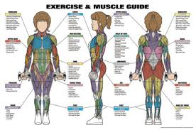 Womens Anatomy Chart Details About Womens Exercise And Muscle Guide Fitness Workout Anatomy Wall Chart Poster