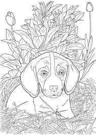 A dog's sense of smell is around a million times more sensitive than that of humans, and their sense. Realistic Dog Coloring Page In 2020 Dog Coloring Book Puppy Coloring Pages Dog Coloring Page