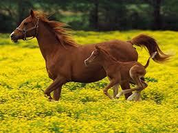 Image result for springtime horse images