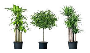 a good indoor plant good indoor plant good indoor plants unique potted plant by good