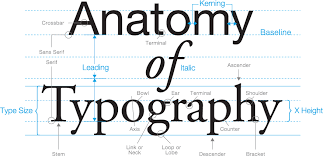 apz media    s notes   typostrate  the anatomy of type here are some   apz media    s notes   typostrate  the anatomy of type here are some