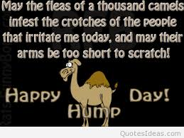 hump day message saying hd
