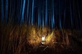 camping in the woods at night. Beautiful View Of Dark Forest At Night Lit By Old Gas Lamp Camping In The Woods N