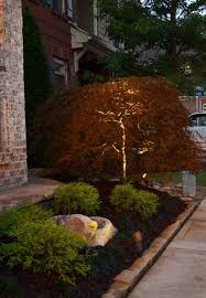 japanese outdoor lighting. uplighting on dwarf japanese maple outdoor lighting