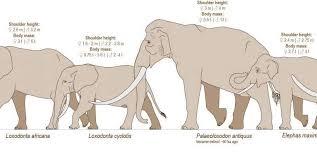 Genetic Family Tree Genetic Study Shakes Up The Elephant Family Tree