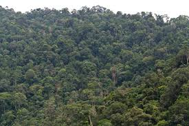 Image result for Regrowing secondary tropical forests