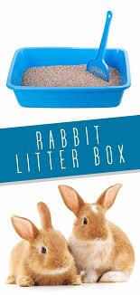 rabbit litter box choosing and using