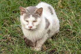 runny nose in cats symptoms causes