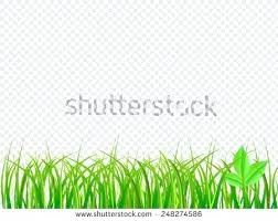 grass transparent background. Grass Border Transparent Background Rustic Green  On Isolated Interior Decoration Courses