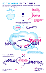 Genome Editing How Can Crispr Genome Editing Shape The Future Of Cancer Research